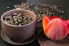 Kaffebönor i den röda blomman för knopp Arkivfoto