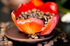 Kaffebönor i den röda blomman för knopp Royaltyfri Bild