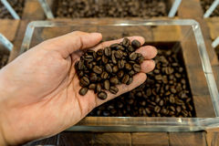 Kaffebönor i en mans hand och behållare i bakgrunden Royaltyfria Bilder