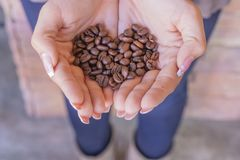 Kaffebönor i händerna arkivbild
