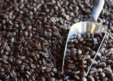 Kaffebönor med metallskopan Arkivbild