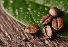 Kaffebönor och leaf Arkivfoto