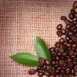 Kaffebönor och sidor på säckväv Arkivbild