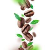 Kaffebönor och sidor som faller från luften arkivbild