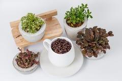 Kaffebönor och växter i blomkrukor arkivfoto