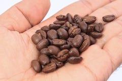 Kaffebönor på handen Arkivfoton