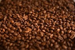 Kaffebönor sänker bakgrund Lågt djup av sätter in royaltyfri foto