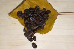 Kaffebönor som ligger på höstbladet Arkivfoto