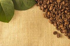 Kaffebönor som ligger på plundra Royaltyfri Bild