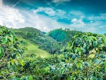 Kaffeberg Jerico, Colombia Royaltyfri Fotografi