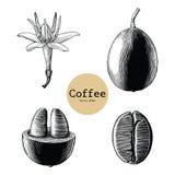 Kaffeblomma, konst för gem för tappning för teckning för hand för kaffeböna som isoleras stock illustrationer