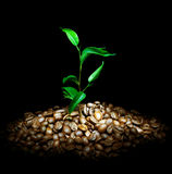 Kaffee-Anlage stockbild