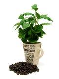 Kaffee-Anlage mit Kaffeebohnen 01 Lizenzfreies Stockbild
