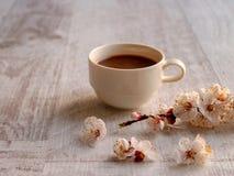 Kaffee auf einem neutralen Hintergrund mit Aprikosenblumen im Vordergrund lizenzfreies stockfoto
