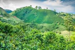 Kaffee-Berg Jerico, Kolumbien stockfoto