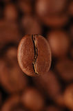 Kaffee-Bohne Lizenzfreie Stockfotografie