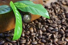 Kaffee - Bohne und Blatt Stockbild