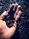 Kaffee, der den dunklen Braten traditionell brät stockfoto