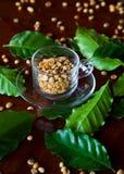 Kaffee-Samen in der Schale lizenzfreie stockfotografie
