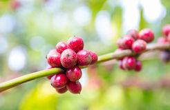 Kaffee von Anfang an Mit dem Rot , blure Hintergrund Lizenzfreies Stockbild