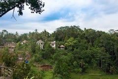 Kaffeebauernhof in Bali Indonesien stockfotografie