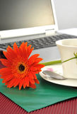 Kaffeeblumenumschlag lizenzfreies stockfoto