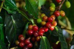Kaffeebohne auf braunem Hintergrund Lizenzfreie Stockfotos