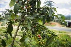 Kaffeebohne auf braunem Hintergrund Lizenzfreies Stockbild
