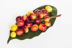 Kaffeebohne auf grünem Blatt Stockfotografie
