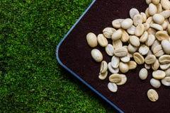 Kaffeebohne auf schwarzem coffe Pulver Stockfoto