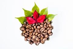 Kaffeebohne, die rote Blume und Blätter Lizenzfreie Stockbilder