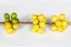 Kaffeebohne und grüne Blätter Lizenzfreie Stockfotografie
