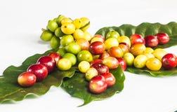 Kaffeebohne und grüne Blätter Lizenzfreie Stockbilder