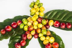 Kaffeebohne und grünes Blatt Stockbild