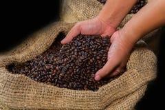 Kaffeebohnen in den Landwirthänden Stockfotos