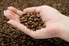 Kaffeebohnen in der Hand Stockfoto