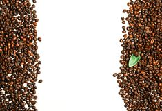 Kaffeebohnen getrennt auf weißem Hintergrund Stockfotografie