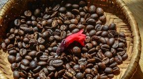 Kaffeebohnen im Korb lizenzfreies stockbild