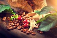 Kaffeebohnen, Kaffeeblumen und Blätter Lizenzfreie Stockfotos