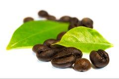 Kaffeebohnen mit Blättern Lizenzfreie Stockfotos
