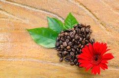 Kaffeebohnen mit Blume und Blättern Stockfoto
