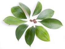 Kaffeebohnen und Blätter Lizenzfreies Stockfoto