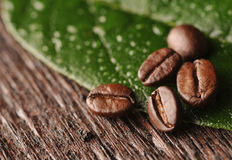 Kaffeebohnen und Blatt Stockfoto