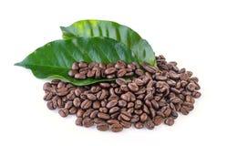 Kaffeebohnen und Blätter Stockfoto