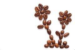 Kaffeebohnen vereinbarten zwei Blumen Lizenzfreie Stockfotos