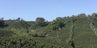 Kaffeelandschaft, Kolumbien lizenzfreie stockbilder