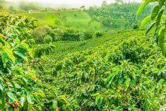 Kaffeeplantage in Jerico, Kolumbien stockfotos