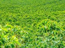 Kaffeeplantage in Jerico, Kolumbien stockbilder