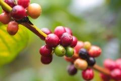 Kaffeestartwert für zufallsgenerator lizenzfreies stockfoto