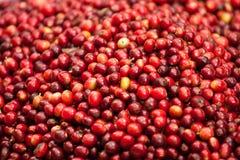 Kaffeestartwerte für zufallsgenerator Lizenzfreies Stockfoto